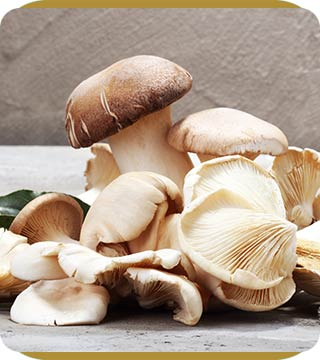 Functional Mushrooms at Alan Wellness & Aesthetics, Located in Brentwood, TN
